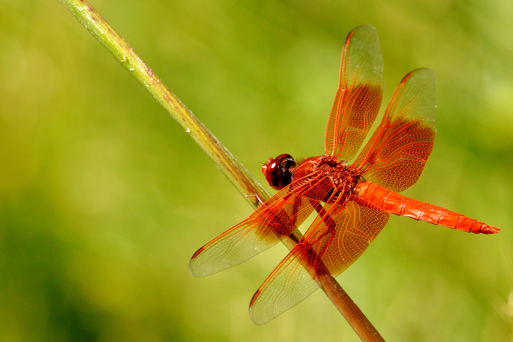Insects - the new superfood! | Explore | Awesome ...  |Insecta Insects