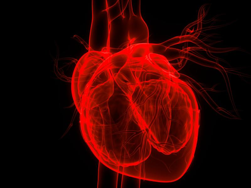 Cardiac Cell Symmetry Could Unlock Greater Understanding of Healthy Heart Formation